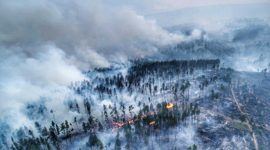 foresta siberia